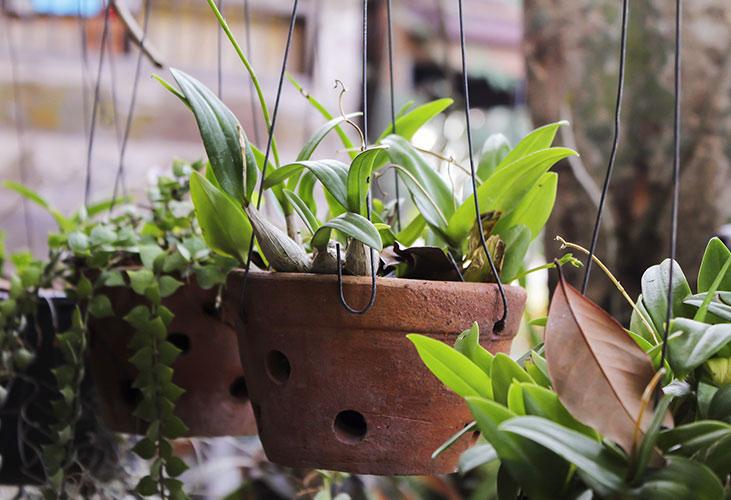 Balkonpflanzen im Hängetopf