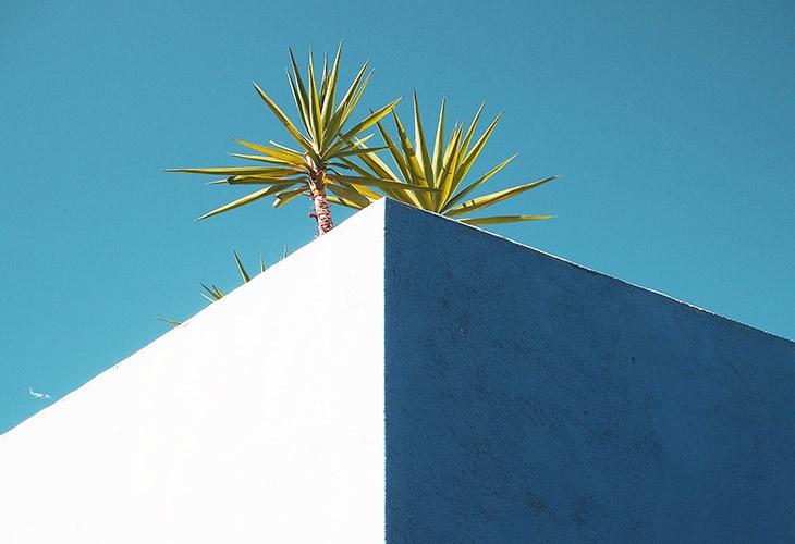 Dachbegrünung: Alle Infos zu deinem Dachgarten