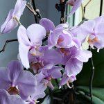 Orchideen eignen sich gut als Zimmerpflanzen.