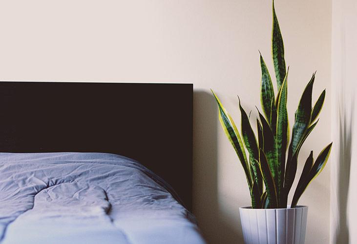 Welche Zimmerpflanzen sind fürs Schlafzimmer geeignet?