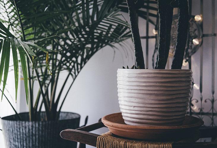 Zimmerpflanzen im Topf