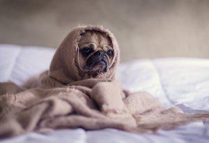 Wenn die Heizung kalt bleibt, ist eine Entlüftung nötig