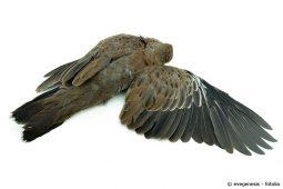 Vogelschlag verhindern