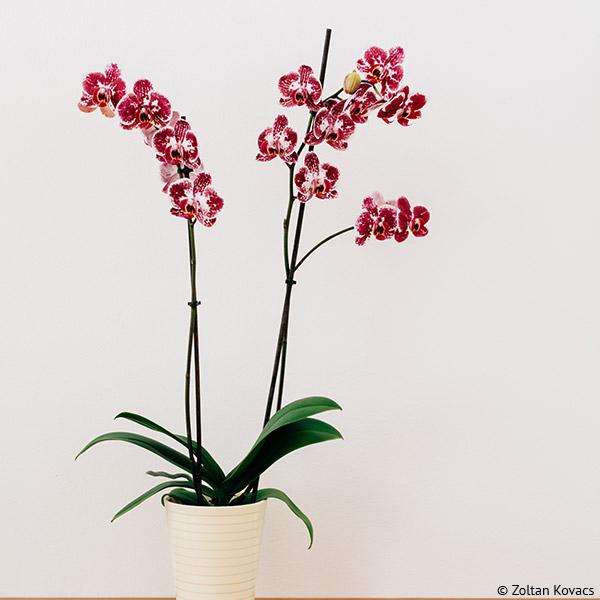 Eine Orchidee darf bei der Badgestaltung als Farbtupfer nicht fehlen