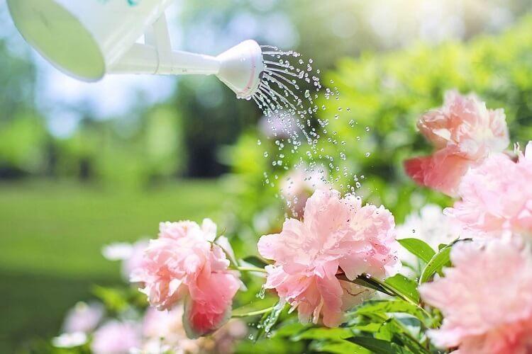 Bewässern von Blumen