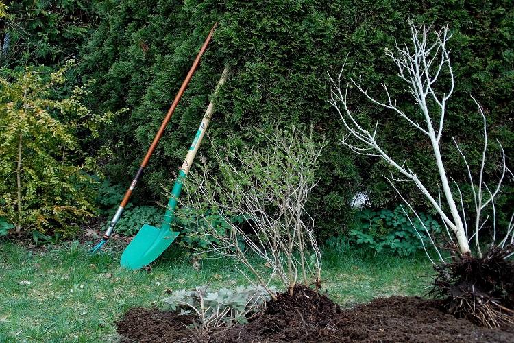 Baum einpflanzen