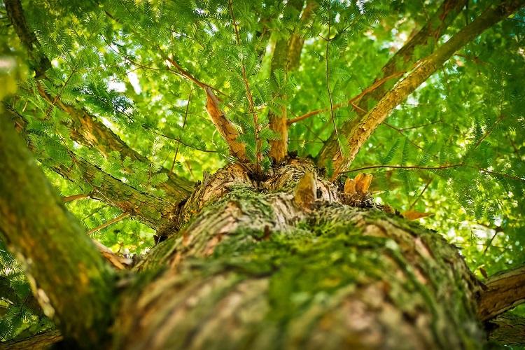Titelbild zu Baumpflege im Garten