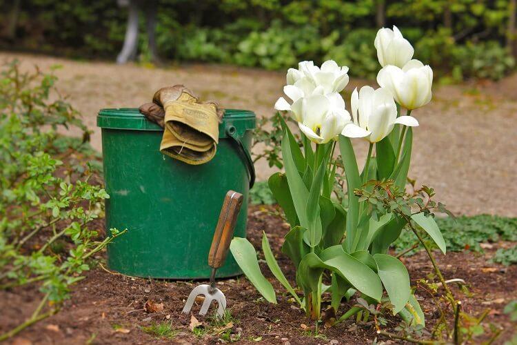 Blumenpflege im eigenen Garten